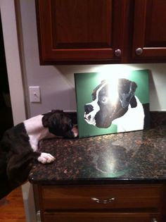 Mac loves the painting we made of him at Woof Gang Bakery in Asheville!