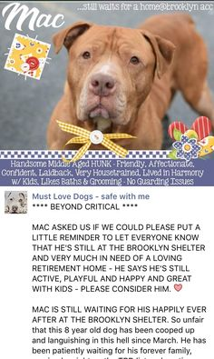 8/28/16 MAC ASKED US TO PUT A REMINDER ON EVERY BOARD YOU KNOW OF❤️❤️ HE NEEDS A LOVING FOREVER HOME OF HIS OWN❤️❤️ THANK YOU❤️❤️ /ij https://m.facebook.com/mldsavingnycdogs/photos/a.197837783735833.1073741837.112453902274222/438740999645509/?type=3&source=48&__tn__=E