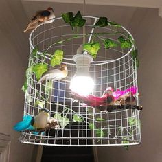 Two Artificial Rainbow Birds magnetic Fake Foam Decorative Metal Window Frames, Wire Frame, Small Birds, Little Birds, Beautiful Butterflies, Beautiful Birds, Lamp Shade Frame, Bird Cake Toppers, Artificial Birds