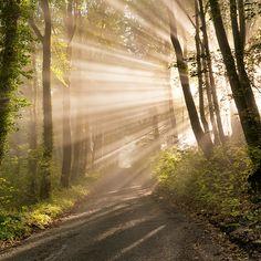 Pearl Rays of Sunlight wallmural #forest #nature #wallmural #wallpaper #tapet #skog #sunlight #photowallsweden