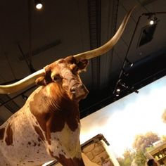 The South Texas Heritage Center at the Witte Museum in San Antonio, Texas    hope my Texas friends check it out!