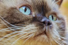 Does your cat have an eye problem? Here's some info to help you know what it could be.
