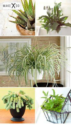 Houseplants I might not kill.  Spider plant- non toxic too
