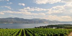 Another Top Nod For Okanagan Valley Wine