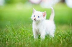 3840x2532 kitten 4k wallpaper pictures free