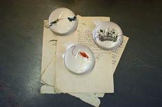 Natural History Paperweights