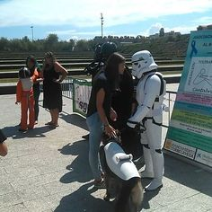 Star Wars em la II Gala canina benéfica ciudad de Santander. #cantabria #santander #starwars #workingdog #dogs_of_instagram Starwars, Cane Corso, Dogs, Pictures, Instagram, Cities, Photos, Star Wars, Pet Dogs