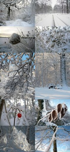 ...snowy forests...a winter wonderland...