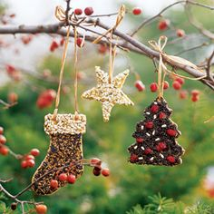 Winter Bird Cookies- To make this project: Coat peanut butter on the fronts and backs of seasonal wooden cutouts bought from a crafts store. Press dried cranberries and seeds, such as niger, sunflowers and mixed birdseed, into the peanut butter and hang. Noel Christmas, Outdoor Christmas, Winter Christmas, Christmas Ornaments, Christmas Countdown, Christmas Cookies, Bird Seed Ornaments, Wooden Ornaments, Bird Cookies