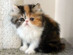 I am absolutely IN LOVE with this adorable little thing. <3