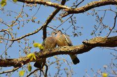 strong relationships, love, birds, true-love, true lover