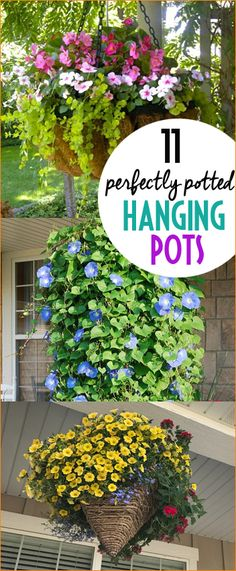 Perfectly Potted Hanging Pots. Beautifully planted hanging pots for your deck, porch or patio. How to maintain and care for your plants. Should I plant shade or full sun flowers?