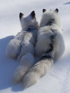 Love Cute Animals shares pics of playful animals, cute baby animals, dogs that stay cute, cute cats and kittens and funny animal images. Nature Animals, Animals And Pets, Baby Animals, Cute Animals, Beautiful Creatures, Animals Beautiful, Fuchs Baby, Wolf Hybrid, Wild Dogs