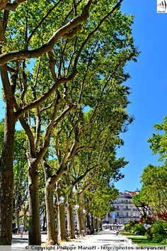Arbres du Jardin du Champ de Mars. Montpellier (France / Languedoc-Roussillon-Midi-Pyrénées / Hérault)