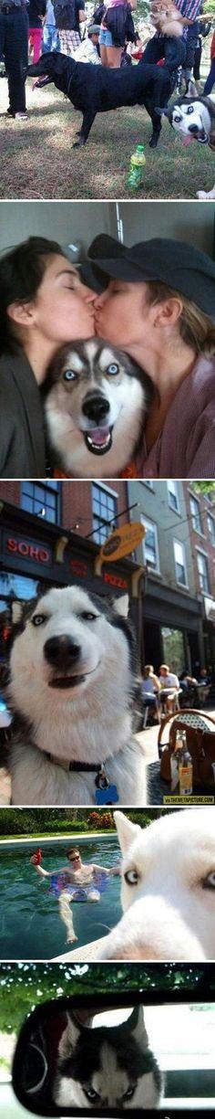 Epic husky photobomb…
