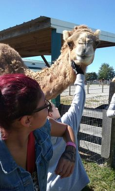 Samsung Photos, Camel, Animals, Animales, Animaux, Camels, Animal, Animais, Bactrian Camel