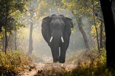 The King Photo by Aneesh Sankarankutty -- National Geographic Your Shot