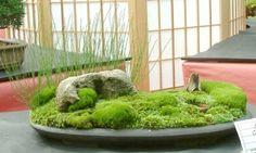 FÓRUM do Atelier do Bonsai - Mário A G Leal :: Exibir tópico - KUSAMONO - qual a importancia disso para o bonsai?
