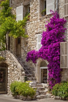 (France)— Colorful Bougainvillea and staircase lead to home in St. Beautiful Homes, Beautiful Places, Front Entrances, Stone Houses, Colorful Flowers, Exotic Flowers, Purple Flowers, Countryside, Outdoor Living