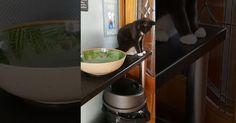 Μια πολύ επίμονη κακομαθημένη γάτα (Video)