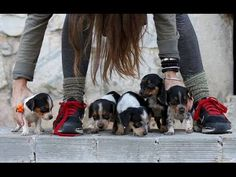 """Tiniest Rescue Puppies - The """"Aww"""" Post - TheOrphanPet"""