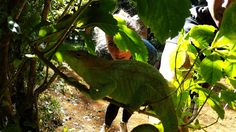Regenwald von Madagaskar-chameleon gefunden:) #regenwald #madagaskar #chameleon #yogi #isytravelyogi
