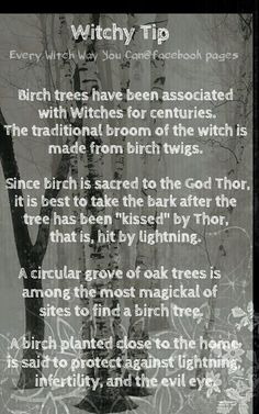 Witchy Tip - Birch Trees Green Witchcraft, Wicca Witchcraft, Magick, Every Witch Way, The Good Witch, Wiccan Spell Book, Wiccan Witch, Tarot, Witch Board