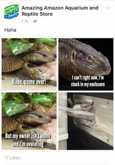 The Best Funny Pictures Of Today's Internet  #funny #pictures #photos #pics #humor #comedy #hilarious #joke #jokes #reptile #reptiles #meme #meme #lizard #lizards