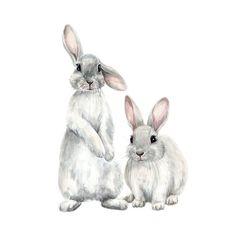 Anna Second ▼ illustrator✳️ on Inst . Rabbit Drawing, Rabbit Art, Bunny Rabbit, Animal Paintings, Animal Drawings, Art Drawings, Indian Paintings, Bunny Painting, Painting & Drawing