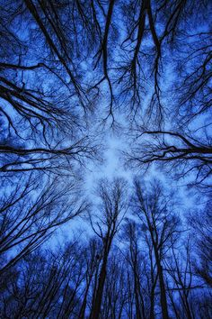 Perspective by Robert Postma - dark blue sky, black trees, silhouette Blue Aesthetic Dark, Aesthetic Colors, Aesthetic Pictures, Montage Photo, Blue Hour, Blue Wallpapers, Belle Photo, Midnight Blue, Shades Of Blue