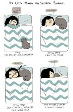 My cats moods and sleeping positions. Cats in bed :) Art of the Cat illustration funny cartoon I Love Cats, Cute Cats, Funny Cats, Funny Animals, Cute Animals, Cats Humor, Funny Horses, Adorable Kittens, Crazy Cat Lady