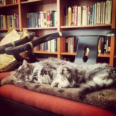 Cats and books - a great combination!