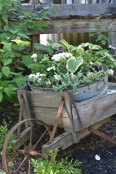 green and white plants in galvanized container . . .