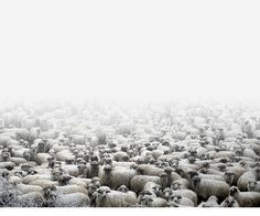 Tamas Dezso is a fine art documentary photographer working on long-term projects focusing on the margins of society in Hungary, Romania and in other parts Des Photos Saisissantes, Paris Photos, Animal Photography, Fine Art Photography, Contrast Photography, Amazing Photography, Haunting Photos, Sheep Farm, Documentary Photography