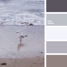 Color Palette #1729
