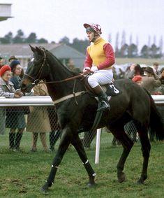 Horse Behavior, Sport Of Kings, Akhal Teke, Racehorse, Grand National, Thoroughbred, Horse Racing, Equestrian, Riding Helmets