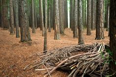 Victoria: Explore the East Warburton Redwood Forest | Adventureme
