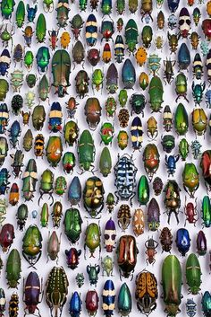 Green Renaissance  Bugs/Beetles are truly beautiful. We obviously prefer them alive, but this display really shows how magnificent they are, we hope you agree.
