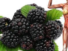 Mnozí je mají v zahradě a vůbec neznají tento zázračný účinek: Ostružiny vás vyléčí a nemusíte je ani jen jíst! Blackberry, Fruit, Food, Blackberries, Meal, The Fruit, Eten, Meals, Rich Brunette