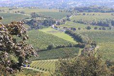 Vienna, Austria, Vineyard, Woman, Outdoor, Outdoors, Vine Yard, Vineyard Vines, Outdoor Living