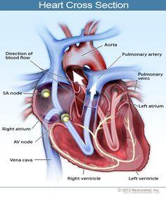 Congestive Heart Failure (CHF) Symptoms, Stages, and Prognosis Chf Symptoms, Signs And Symptoms, Heart Failure Symptoms, Heart Attack Symptoms, Atrial Flutter, Heart Failure Treatment, Heart Rhythms, Atrial Fibrillation