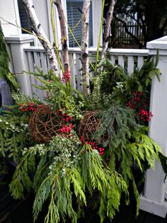 Birch sticks provide a vertical element in this holiday container garden. Design by Sappho. Birch, boxwood, spruce, holly, and assorted conifers.