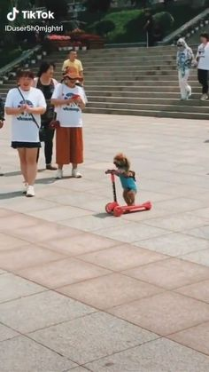 Cute Animal Videos, Funny Animal Pictures, Cute Funny Animals, Cute Baby Animals, Funny Cute, Animals And Pets, Cute Puppies, Cute Dogs, Cute Babies