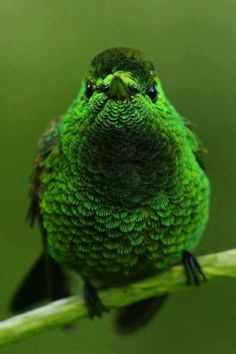 green bird.