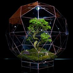 Large Pentakis Dodecahedron Terrarium is 60cm in diameter constructed from 80 triangles faces by Angles+Earth. Suitable for any landscapes.