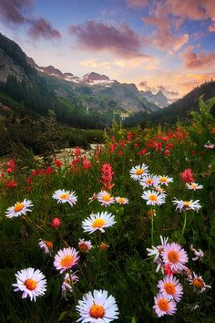 #Sunset, #Flowers, #Mountains, #Field