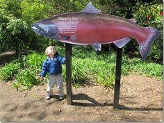 Exploring Geography: Washington State Salmon!