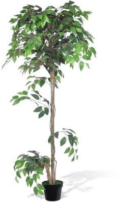 #Artificial #plants #trees wedding office decor home fake #plant flowers ficus 160,  View more on the LINK: 	http://www.zeppy.io/product/gb/2/322003685955/