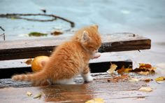 Animals cats felines kittens fur whiskers paw wet rain wood ...