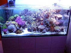 all about starting and maintaining salt water fish tank.